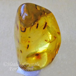 Amber containing ants